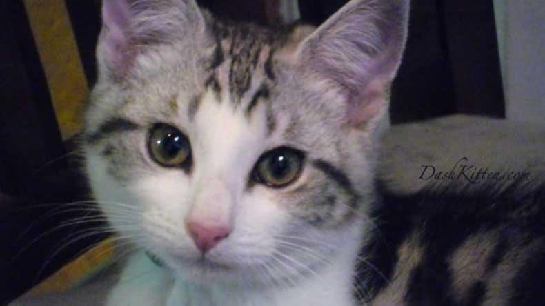 Silver Kitten as a cute Baby 2013