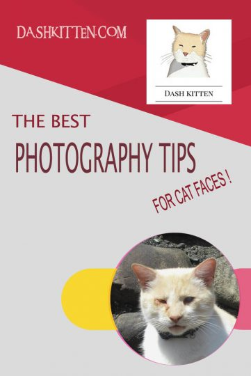 Bedt Pet Photography Tips