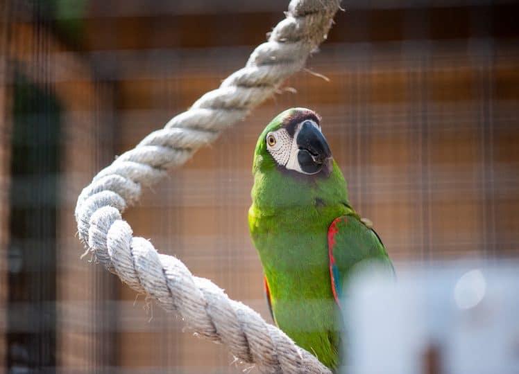 Bird picture pet close-ups
