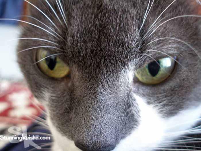 Cathy Keisha Ghetto Kitty