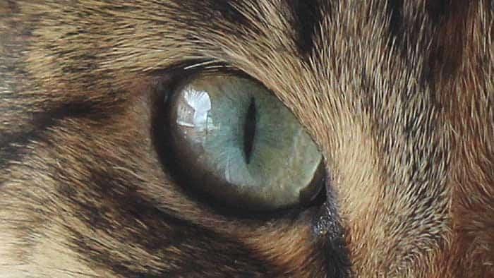cat closeup photography