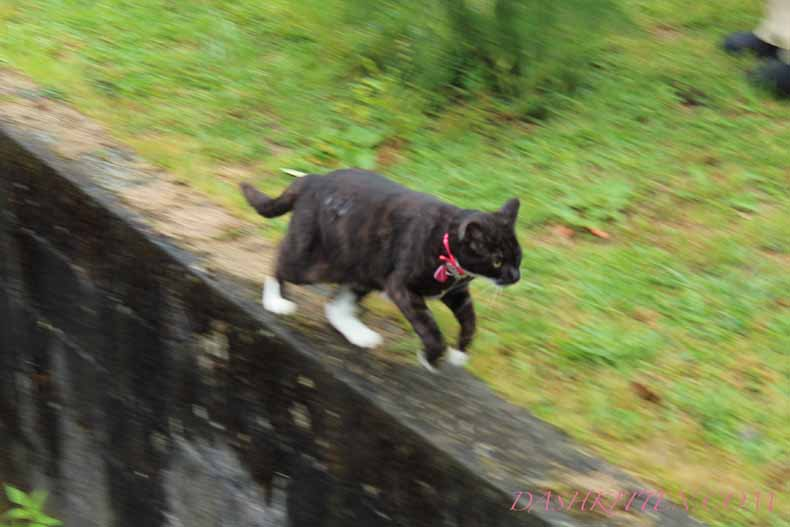 Fails with Settings. Out of focus cat running