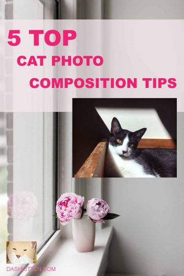 Cat Composition Tips Pin
