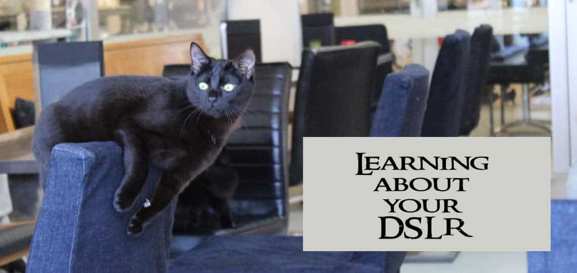 Learning About Cat Photography with your DSLR