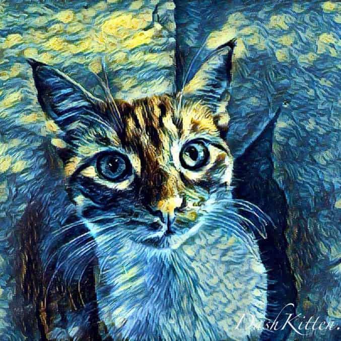 This is a Photo Lab Starry Night Filter Oscar