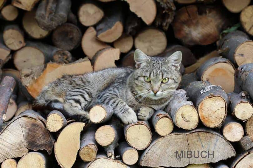 Textured cat composition in a woodpile