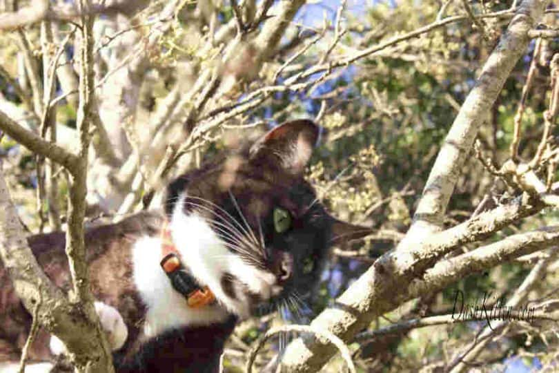 Cat closeup in a tree