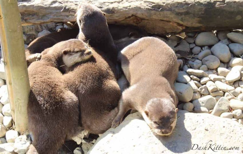 Otters in sunshine