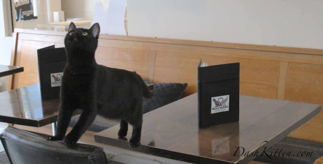 Black Cat Series