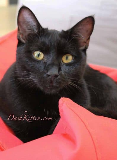Black cat photograph of Po