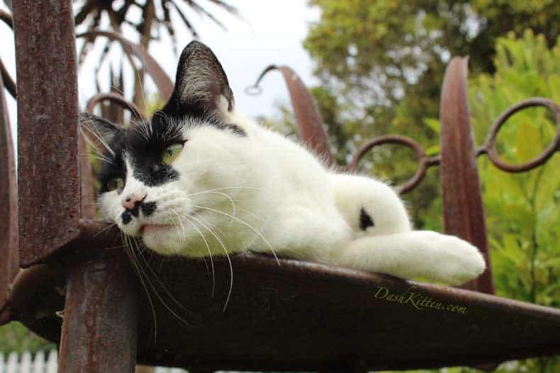 Get Closer For Great Cat Photos