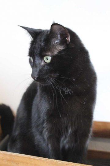 Black Cat Photography progress Black Cat profile