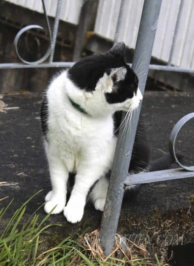 Black and white cat photograph
