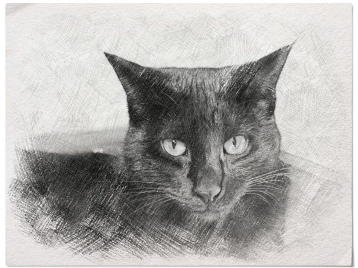 'Sketch' Filter of Pan the Black Cat - Photo Lab Cat Photography HD