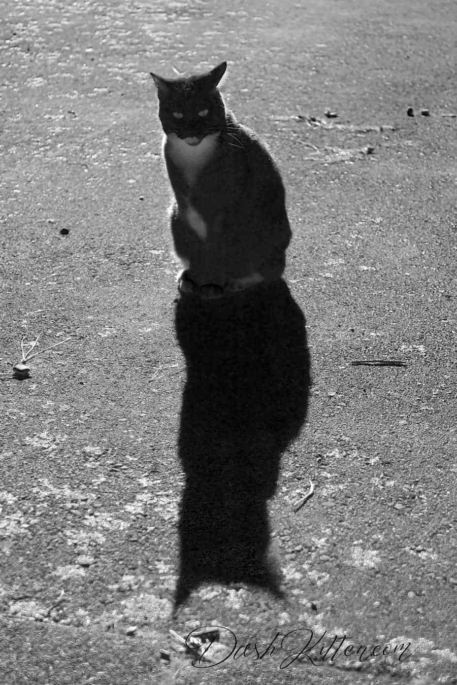 Shadows can make a big impact on your black and white pictures